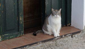 Katze, auf Katzen-Telepathin wartend