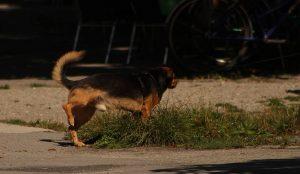 """Aussage eines Hundes zum Thema """"Tier-Tele-Therapeut"""""""