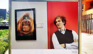 Wie groß ist die Distanz zwischen Affe und Mensch?